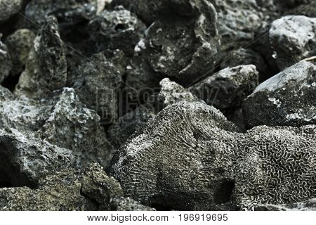 View of stones and dead coral at sea resort, closeup