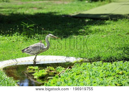 Exotic bird in artificial pond on sunny day