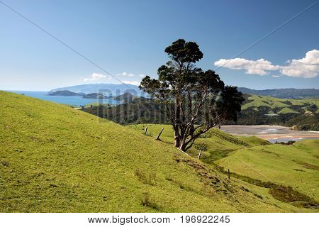 Meadows And Hills On The Coromandel Peninsula