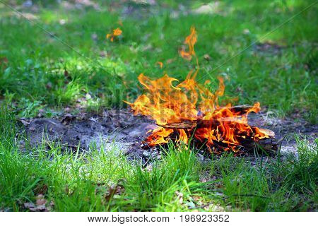 The bonfire from the branches of trees on the green grass.