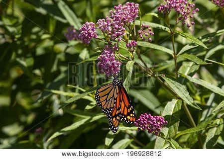 A butterfly hanging on a flower at the butterfly garden in New Jersey