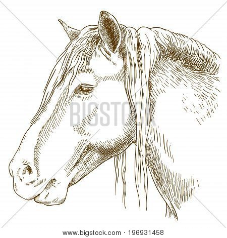 Vector antique engraving illustration of horse head isolated on white background