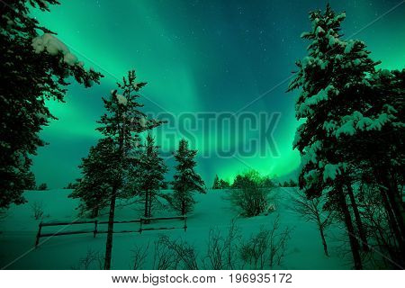 Beautiful aurora borealis with snow and trees