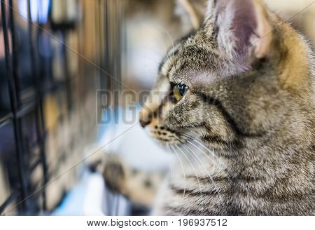 Macro Closeup Of One Tabby Cat's Face Sitting In Cage