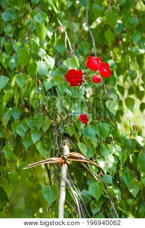 BERLIN - MAY 09 2015: Victory Day. Red carnations St. George ribbon on the branches of a birch. Avenue of the Soviet memorial in Treptow Park.