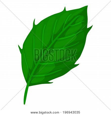 Thistle leaf icon. Cartoon illustration of thistle leaf vector icon for web on white background