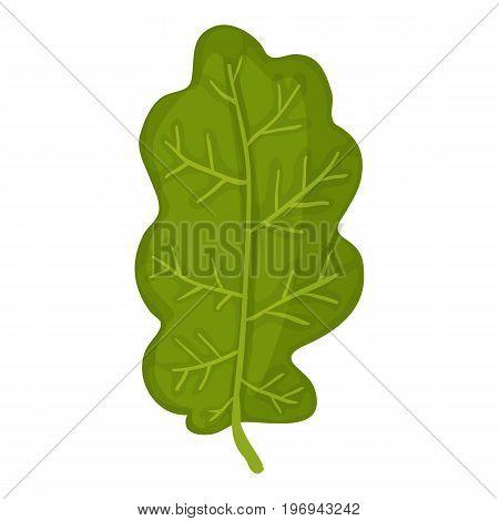 Green oak leaf icon. Cartoon illustration of green oak leaf vector icon for web on white background