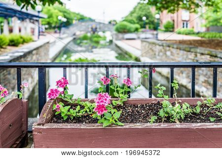 Frederick, Usa - May 24, 2017: Carroll Creek In Maryland City Park With Canal And Flowers On Bridge