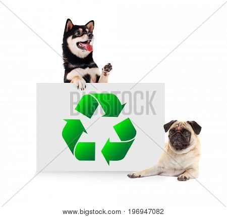 Cute dogs and poster with sign of recycling on white background. Ecology and environment conservation