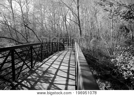 Bridge for walking through wooded paths in forest in black and white