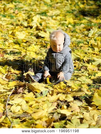 Portrait of toddler child in warm vest jacket outdoors. One year old baby boy with yellow maple leaf in autumn park