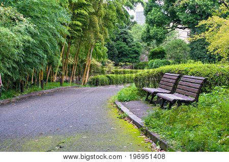 Bamboo alley with bench in public park. Imperial Palace Gardens Japan