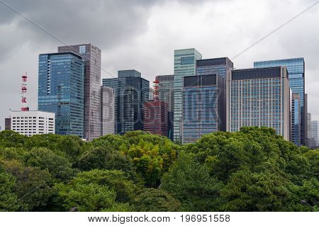 Modern Skyscrapers With Lush Green Tree Canopies On The Foreground
