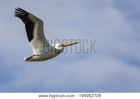 American White Pelican Flying in a Cloudy Blue Sky
