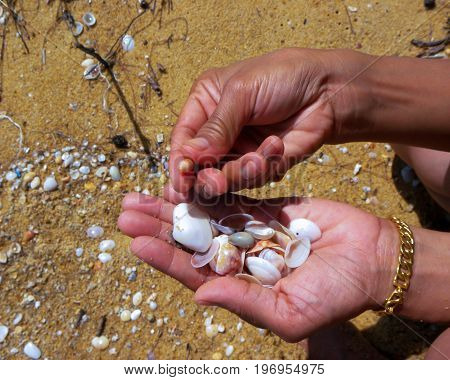 Collecting seashells while walking along the beach with a cool ocean breeze.