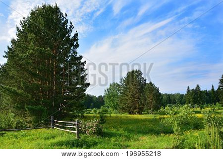Summer landscape with wooden fence in field and blossoming flowers of a dogrose.