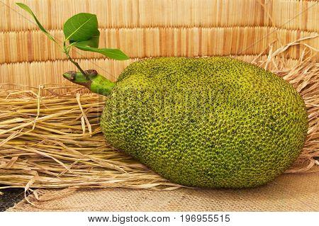 Fresh ripe jackfruit. Sweet jackfruit ready for eat. Exotic tropical fruit. For gourmet. Selective focus.