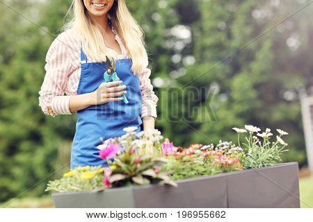 Woman growing flowers outside in summer