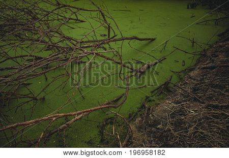 old dead tree in swamp | dead tree trunk in water