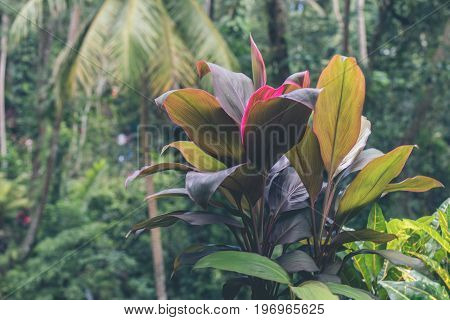 Green jungle on Bali island. Tropical rainforest scene.