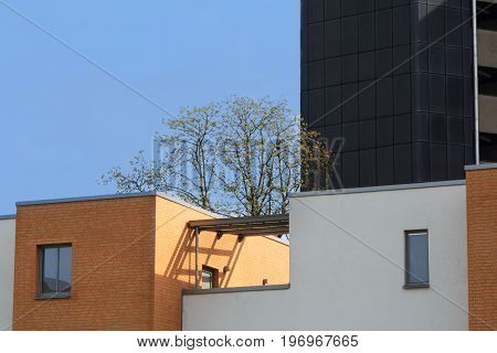 a tree is growing on the top of the house