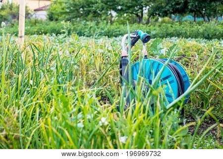 An image of a garden hose on wheels. Hose for irrigation