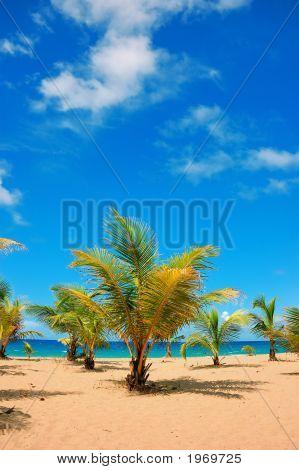 Guajacata Beach, Puerto Rico, Usa.