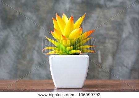 Decorative colorful yellow houseplant in small white pot