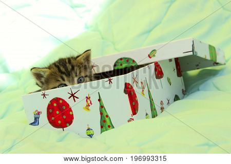 Christmas, Animals, Present, Gifts concept - Cute tabby kitten playing in a gift box. Red Kitten in the Christmas box.