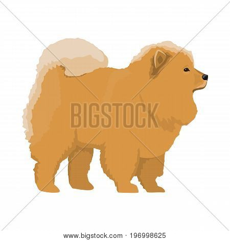 Vector illustration of Chow-chow standing on white background.