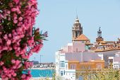 Blooming Oleander against the background of the historical center in the Sitges Barcelona Catalunya Spain. Copy space for text. Isolated on blue background poster