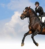 show jumping - woman and bay horse poster