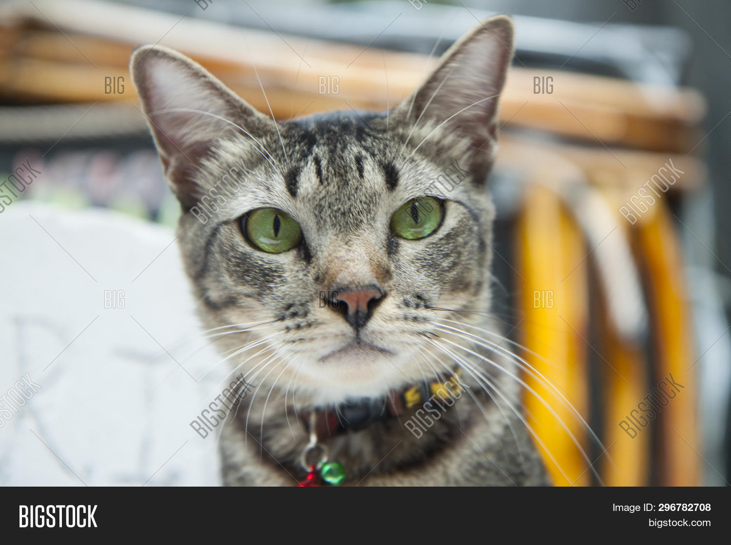Gray Cat Green Eyes Image & Photo (Free Trial) | Bigstock