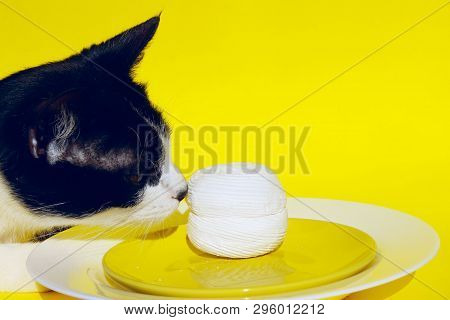 Cat Sniffs The Food On The Plate. Cropped Shot of A Cat Over Yellow Background.Cat Steals Food From The Table. poster