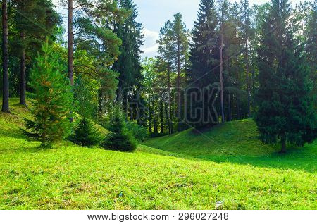 Forest spring landscape in sunny weather - forest trees growing in the spring valley. Forest spring nature in sunny day