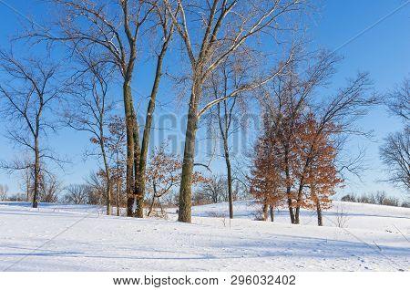 Snowy Landscape Of Battle Creek Regional Park In Saint Paul Minnesota