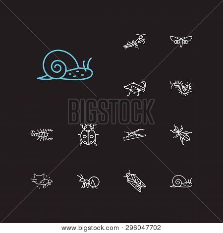 Beetle Icons Set. Louse And Beetle Icons With Mantis, Butterfly And Stickbug. Set Of Creature For We