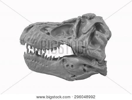 T-rex Tyrannosaurus Rex Skull : Tyrannosaurus Rex Skull Model / Isolated White
