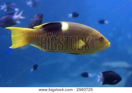 Parfish