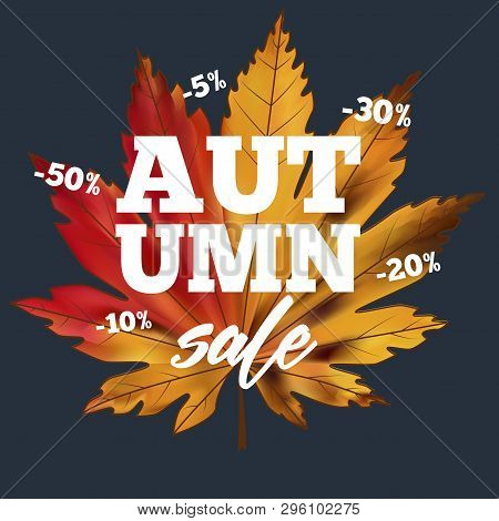 Sale Banner With Colorful Seasonal Fall Leaves. Shopping Discount Promotion Vector Illustration. Bri