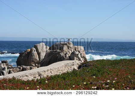 This Is An Image Of The Rocky Shoreline Of Pacific Grove, California Taken In Full Morning Sunshine.