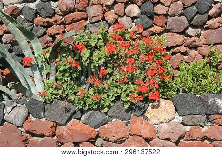 Flowers And Agaves Near The Stone Wall. Design