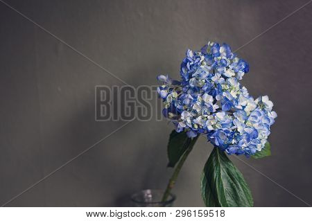 Bouquet Of Blue Hydrangea In A Glass Vase, With Large Green Leaf, With A Grey Textured Wall Backgrou