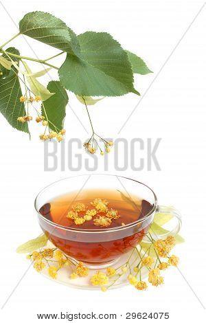 Tea With Linden Flowers