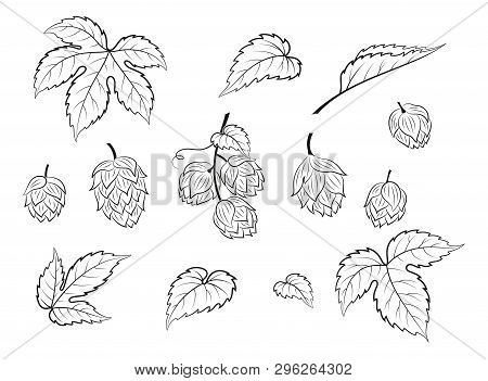 Set Of Plant Pictograms, Hop Seeds And Leaves, Black Contour On White Background. Vector