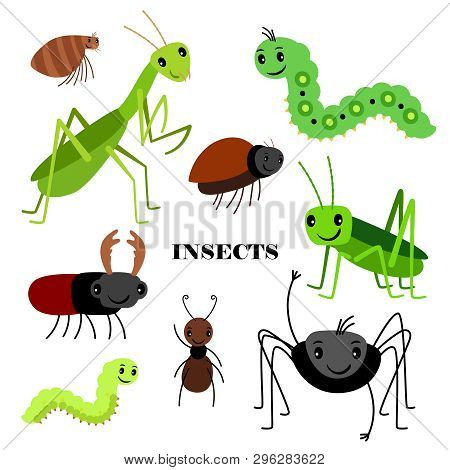 poster of Illustration of vector crawling insects isolated on white background. Insect bug, fauna wildlife, cartoon crawl insects illustration