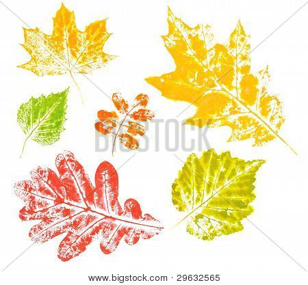 Colored Imprint Of Autumn Leaves Isolated