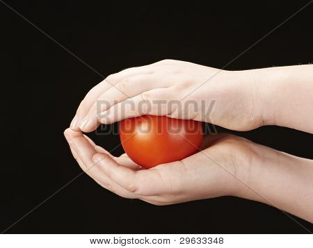 Tomato sandwiched between childs hands