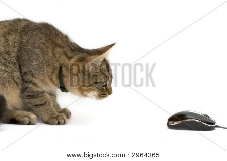 The small kitten plays with the computer mouse poster
