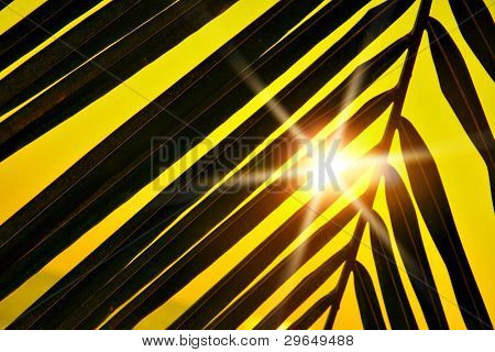 Palm leaf silhouette and sun beams at sunset